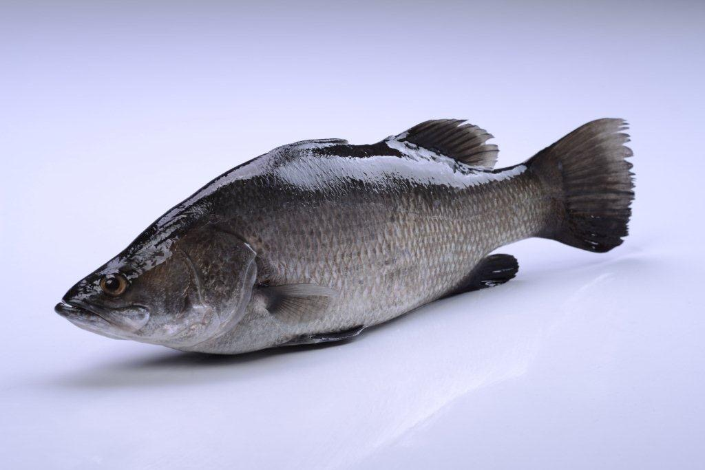 A o kingdom international co ltd for Barramundi fish taste