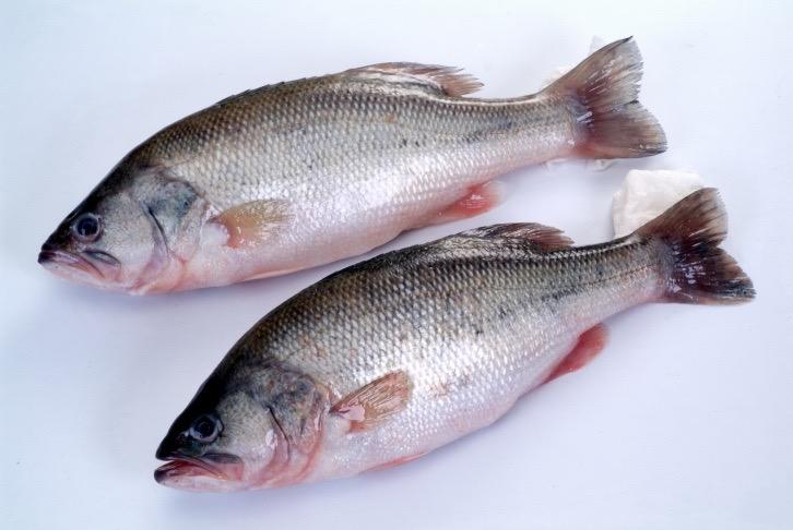 A o kingdom international co ltd for Farm raised fish